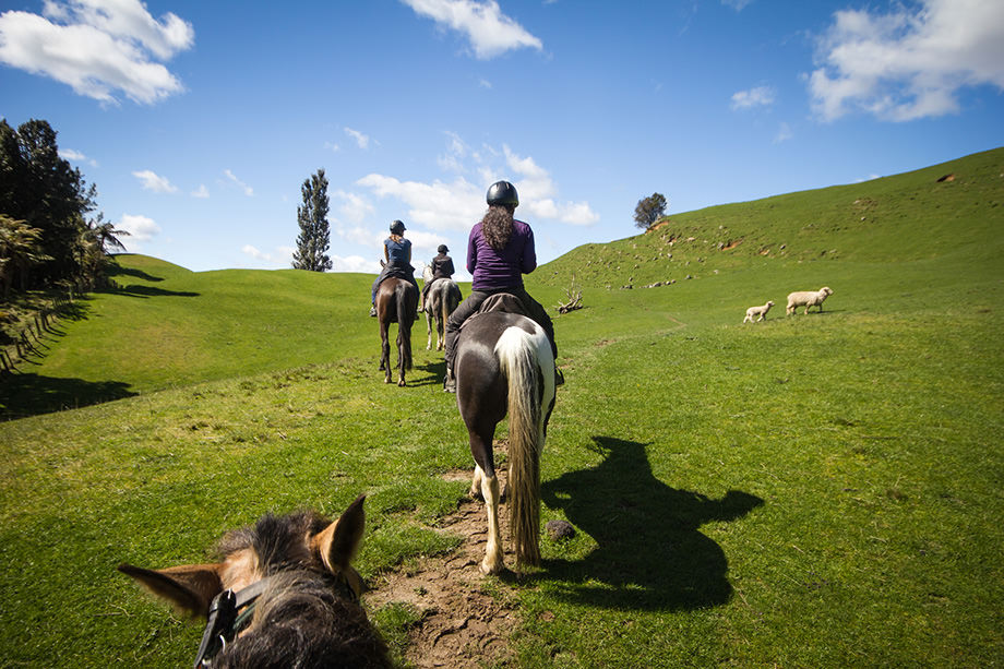 People taking part in horseriding